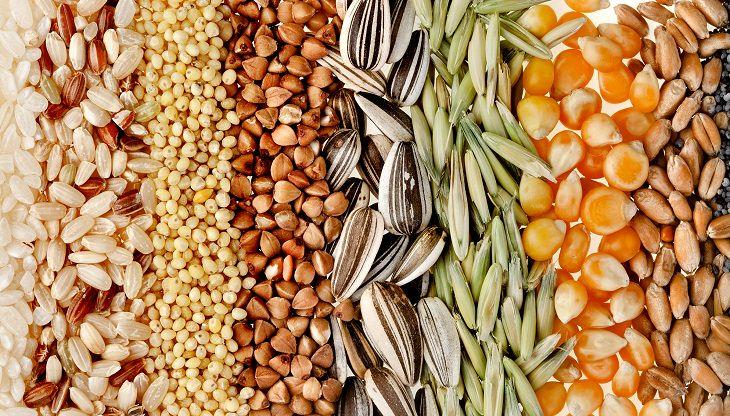 dieta de sementes