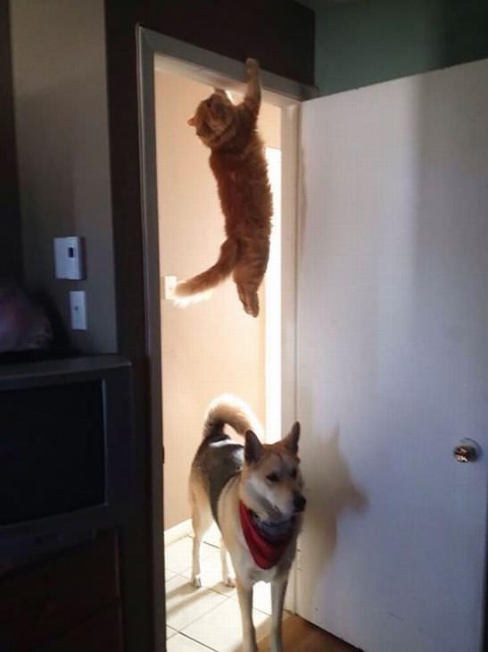 Gatos muito ninjas