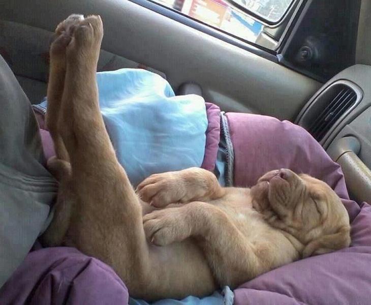 cachorrinhos fofos dormindo