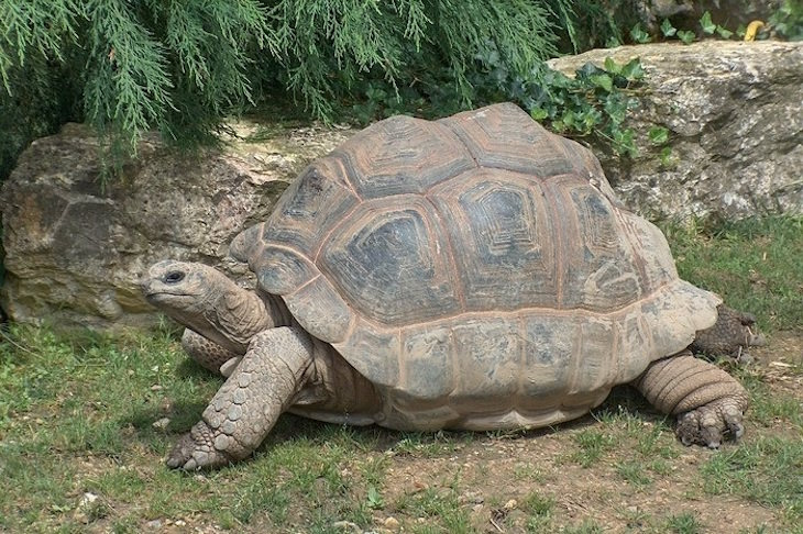 10 animais mais lentos do mundo tudoporemail