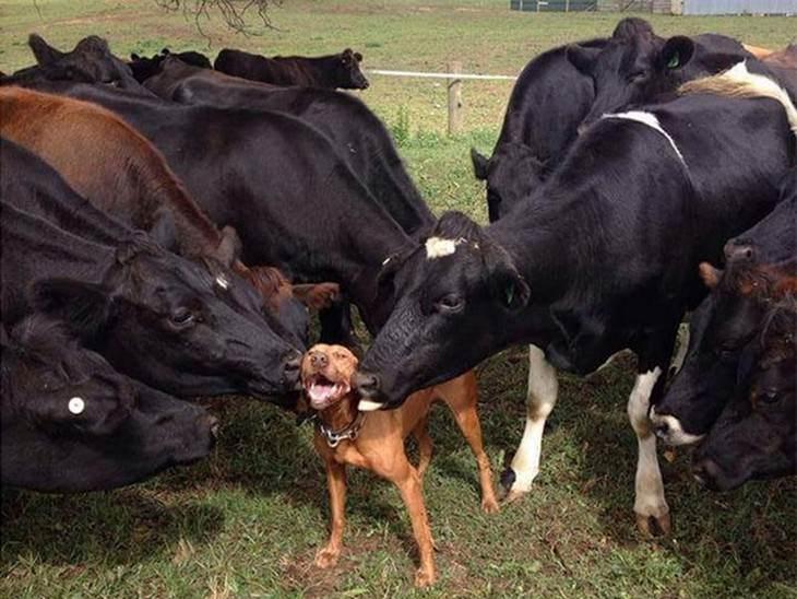5 animais sorridentes e de bom humor