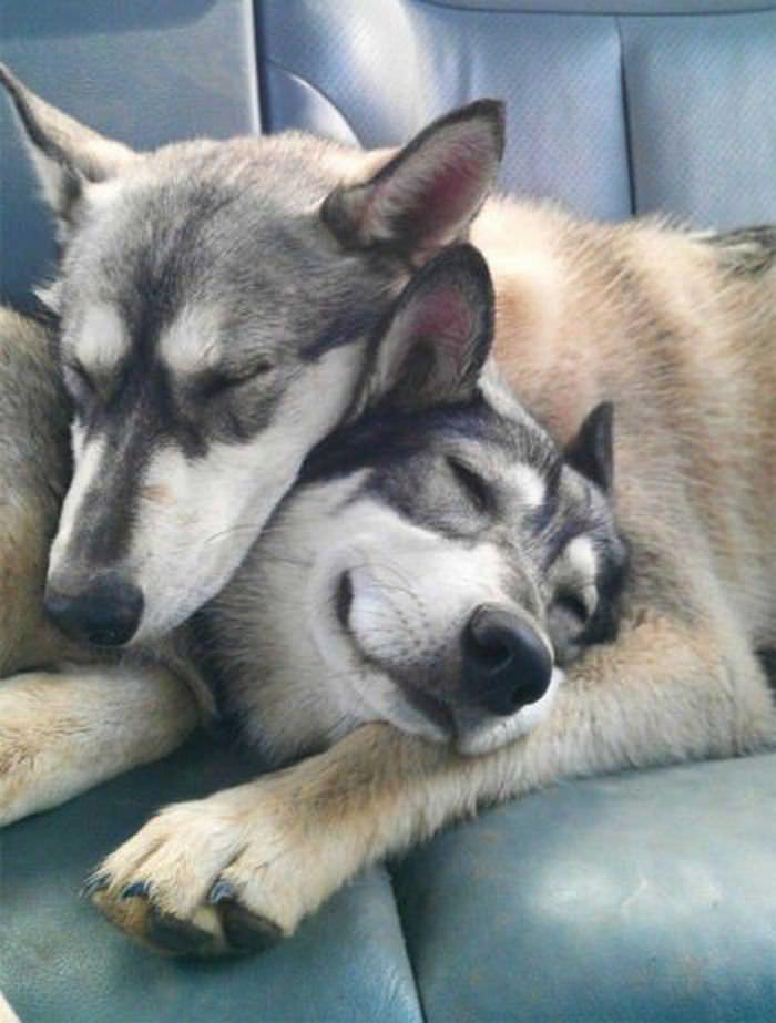 18 Fotos de Cães Apaixonados