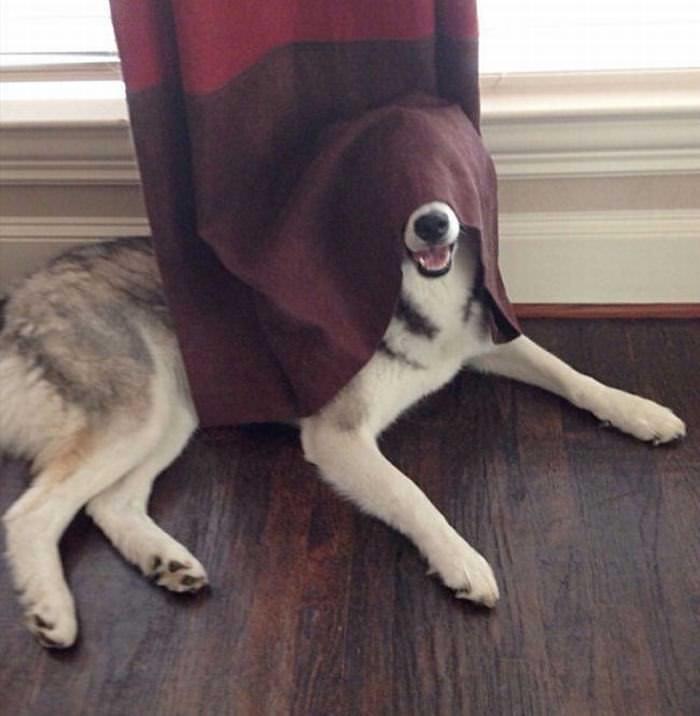 20 Cachorros Que Não Sabem Se Esconder