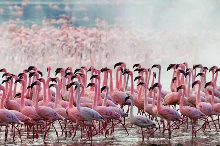 A beleza dos flamingos