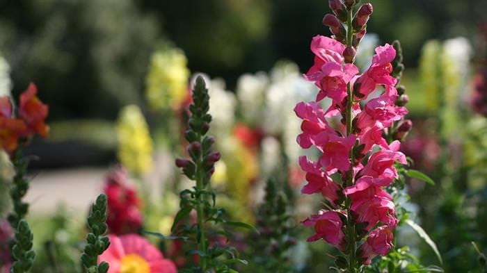 Convide as Borboletas ao Seu Jardim