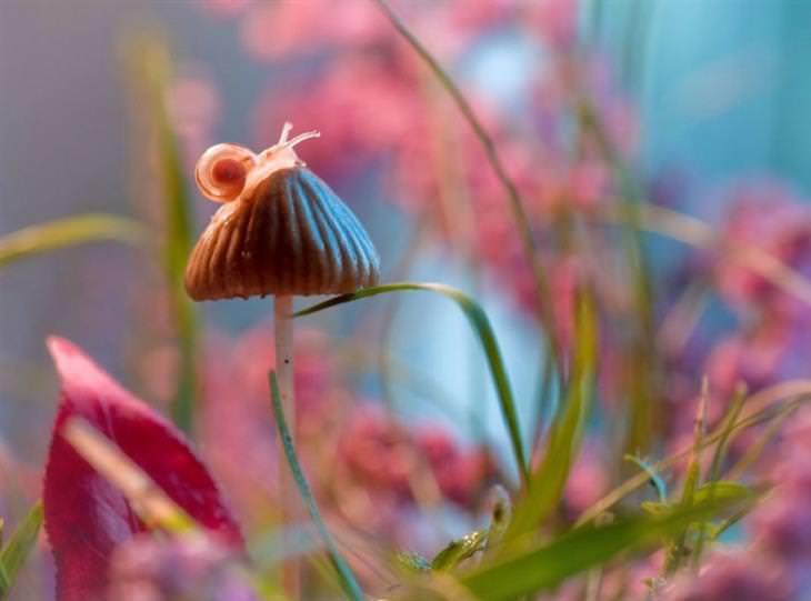 belas imagens de insetos em alta definição