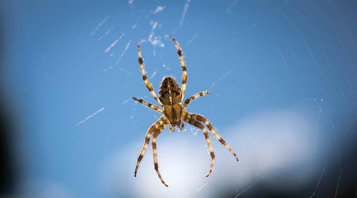 dicas para espantar aranhas