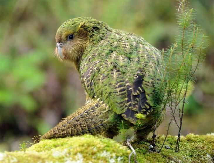 15 aves lindas raras