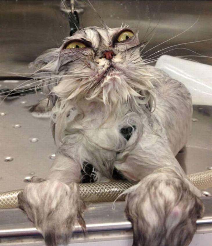 animais antes e depois do banho