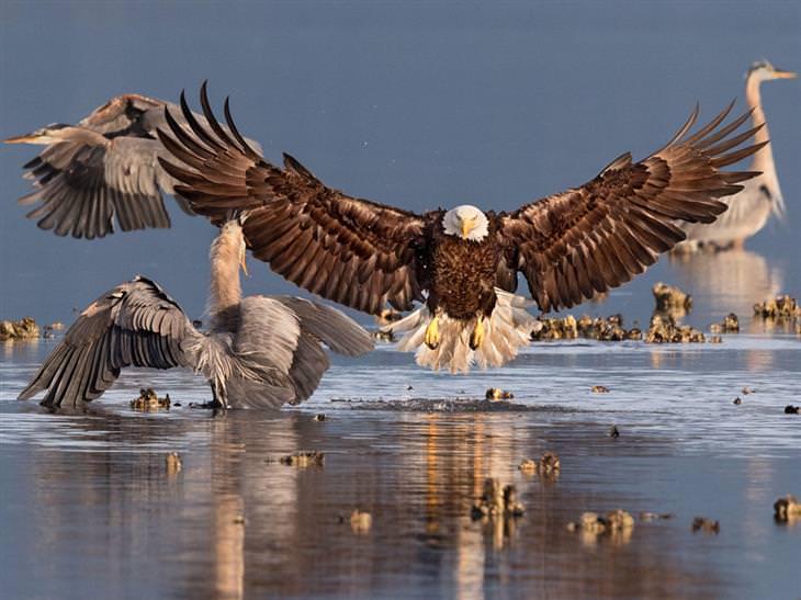 imagens premiadas de pássaros selvagens