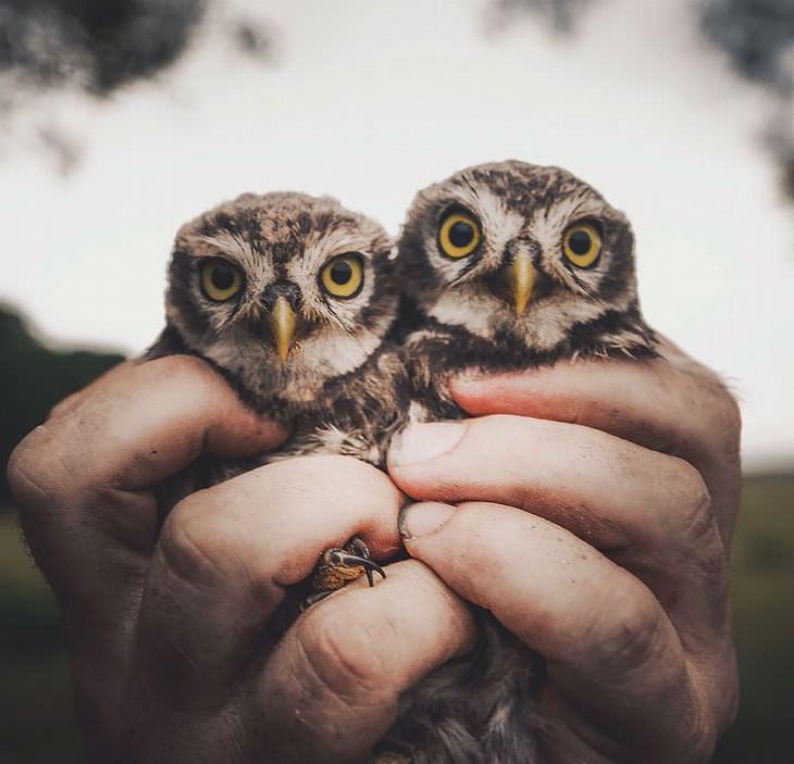 Fotos incríveis de animais selvagens!