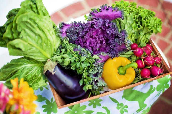 Uma Nutrição Adequada Pode Prevenir o Câncer