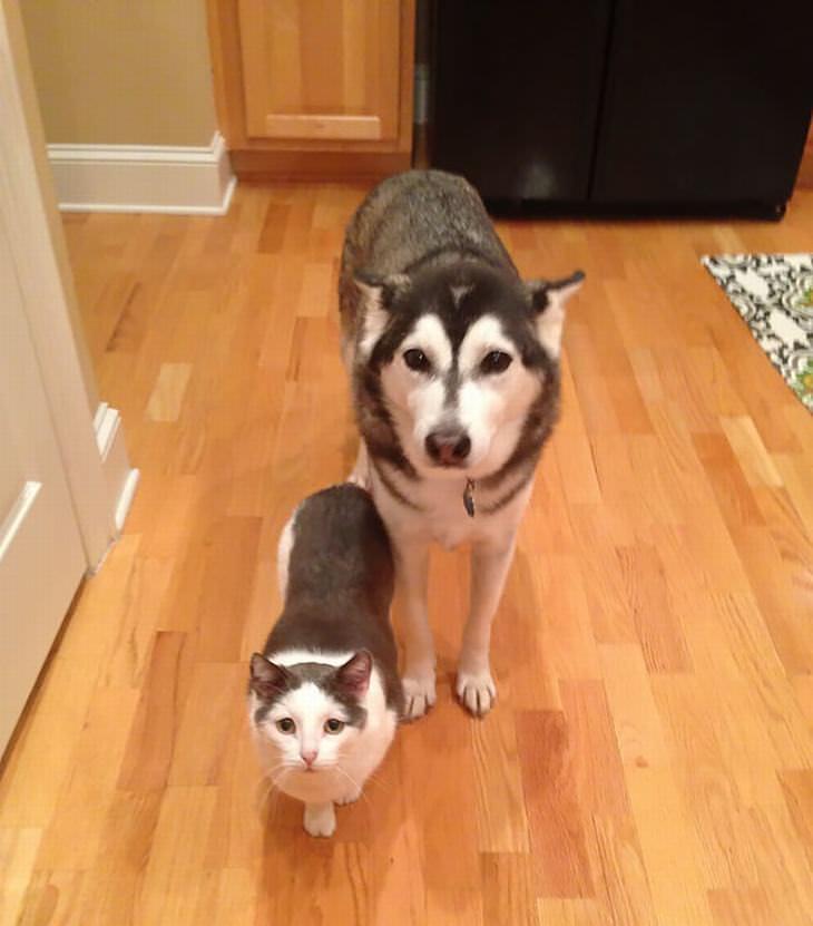 Animais super parecidos de espécies diferentes