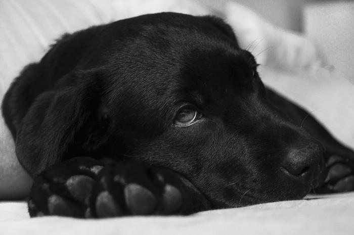 Sintomas que mostram se o seu animal de estimação está adoecendo ou doente
