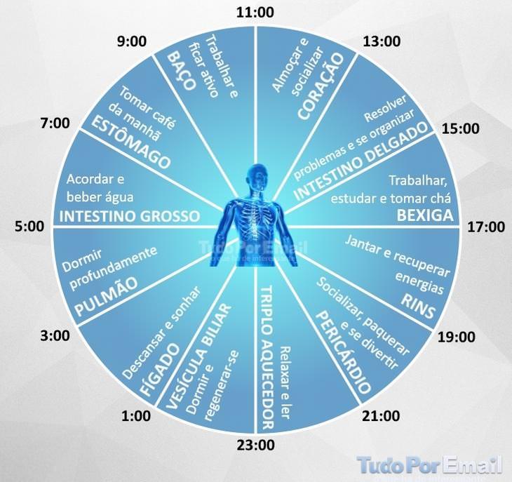 relógio biológico chinês
