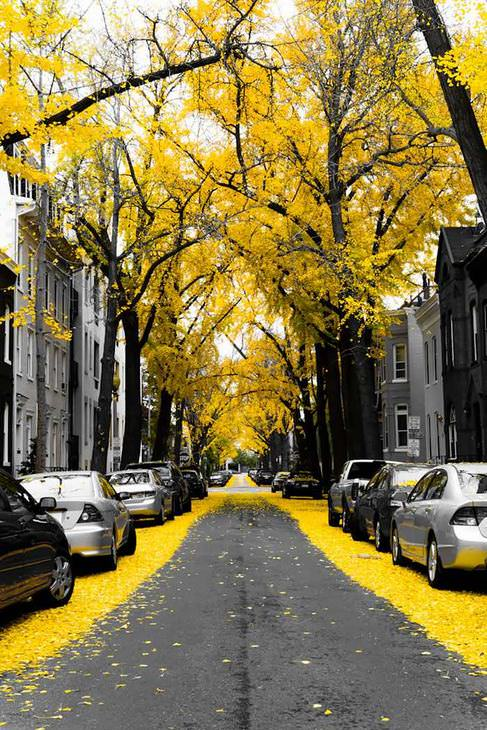 15 ruas ao redor do mundo perfeitas para um passeio