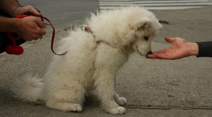 GUIA: Como evitar um ataque de cão