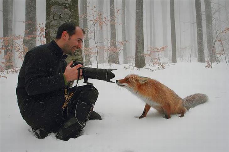 Animais Selvagens Interagem com Fotógrafos!
