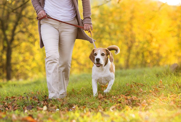 tratamento para cães de artrite