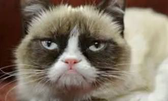 gato mal humorado