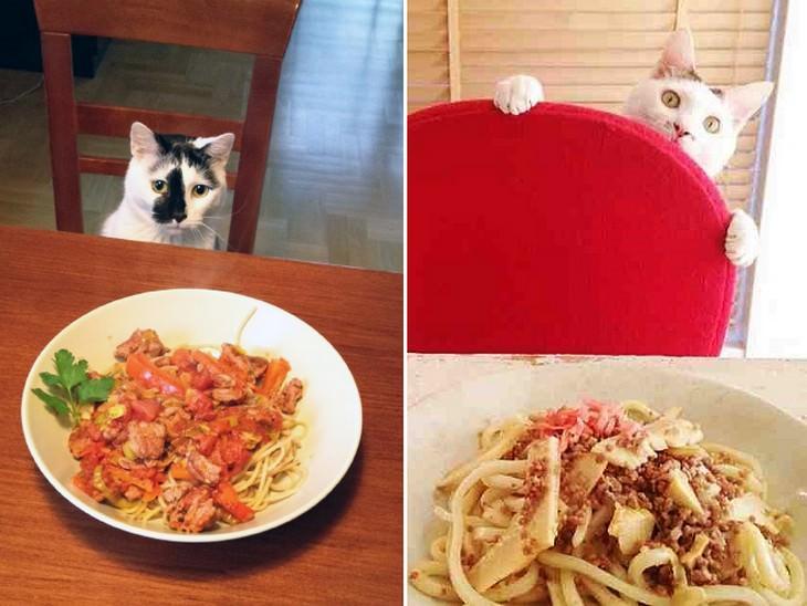 Alguns gatos só têm olhos para sua ceia deliciosa