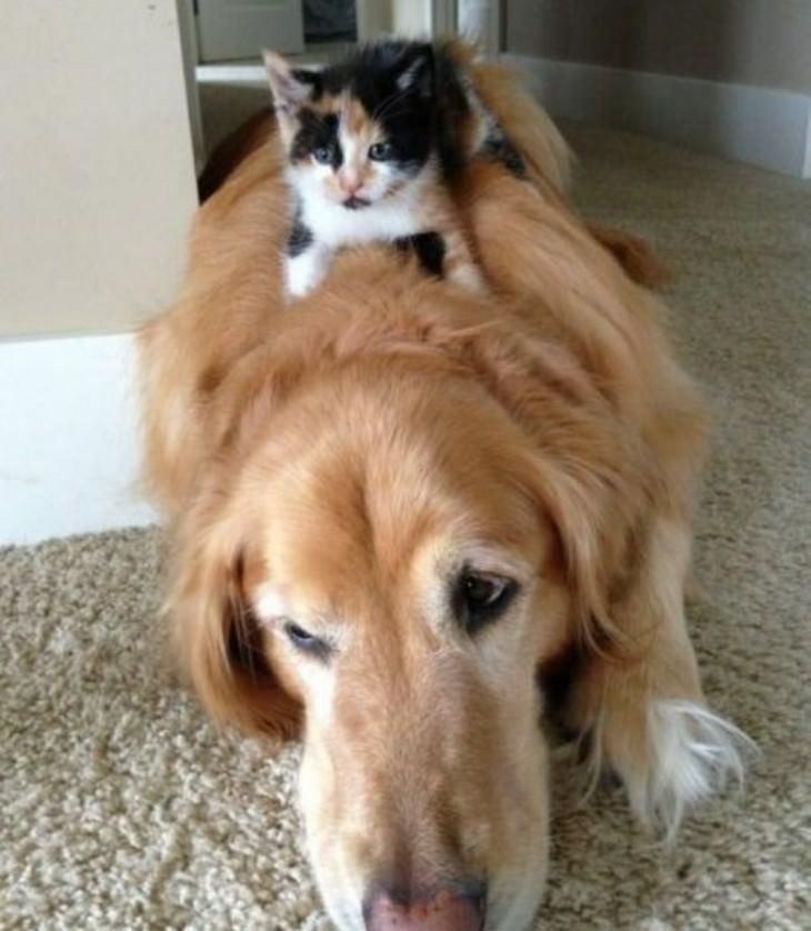 22 fotos que provam a dominância dos gatos sobre os cães