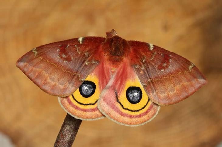 antes e depois: lagartas e borboletas