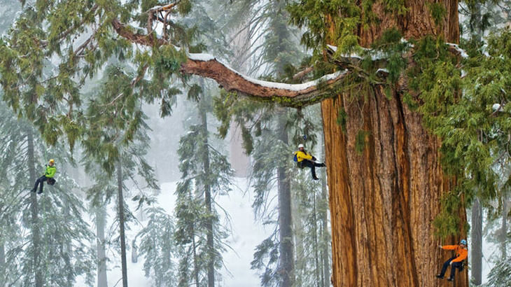 The President a maior sequoia do mundo foto national geographic