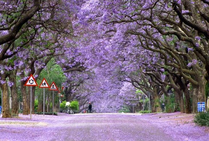 as árvores mais lindas do mundo