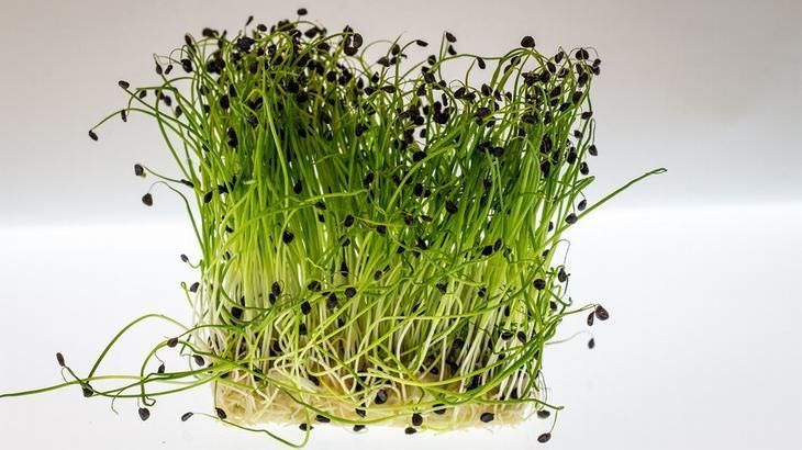 os benefícios do agrião para a saúde
