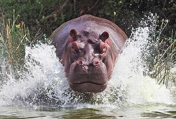 Deslumbrantes Fotos Do Mundo Selvagem