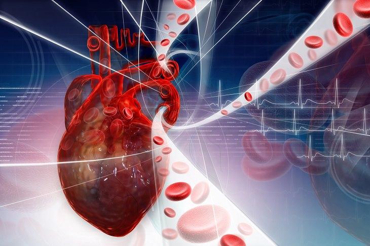 Vídeo do sistema circulatório cardíaco em telugu
