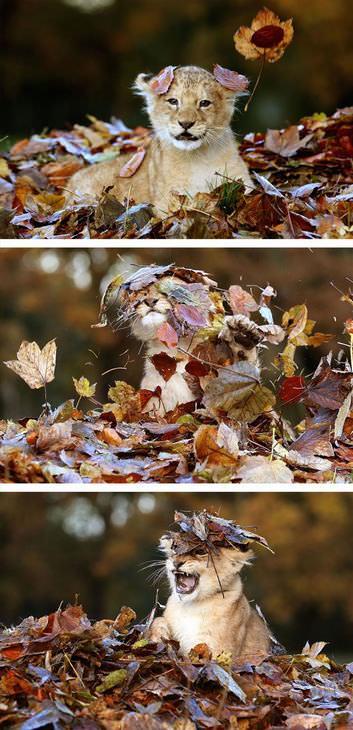 Animais no outono