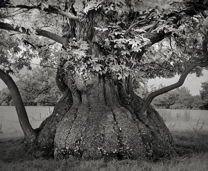 As Árvores Mais Antigas do Mundo!