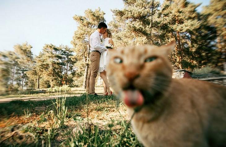 15 fotos de gatos hilários tiradas no momento certo