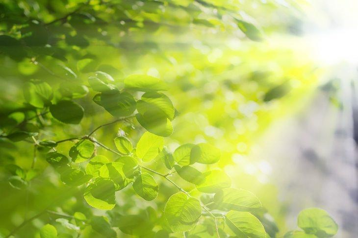 Como manter suas plantas em boas condições