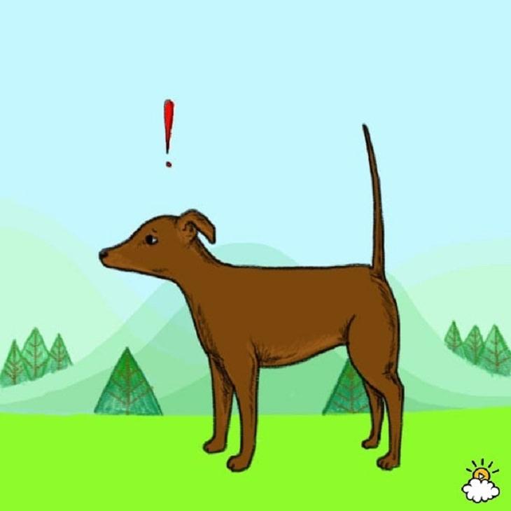 como o cachorro se expressa através da cauda tudoporemail