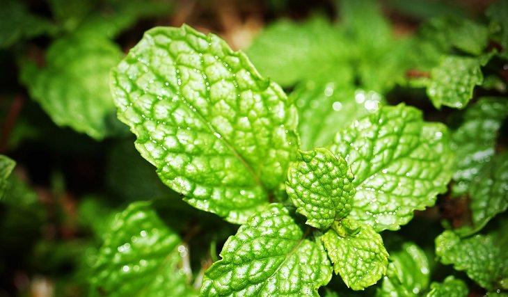 8 plantas que reduzem o estresse