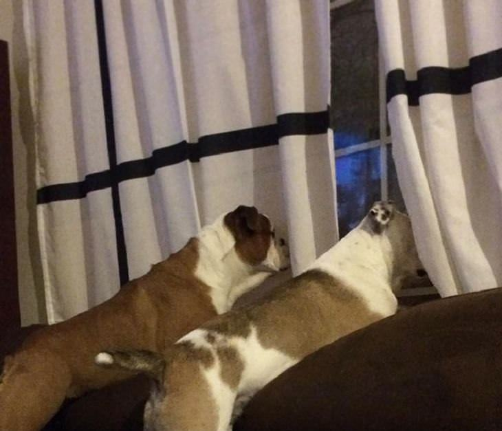 Snapchat de cachorros engraçados