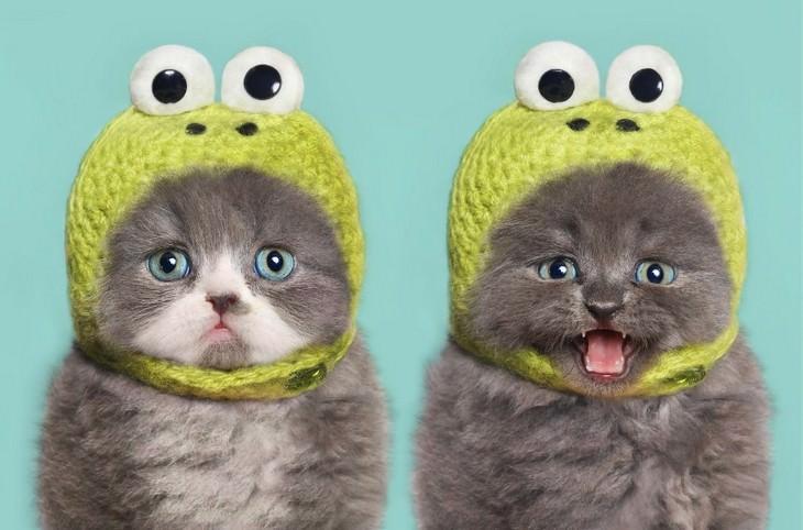 fotos de gato