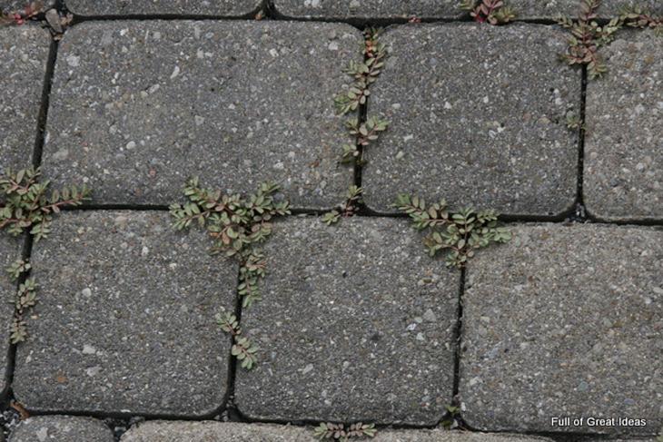 Diga adeus às ervas daninhas de uma maneira totalmente natural