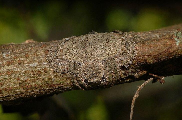 20 Espécies animais que são mestres em camuflagem