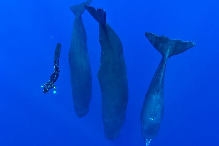 natureza imagens de baleias dormindo no oceano