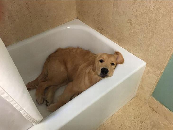 os melhores memes caninos da internet