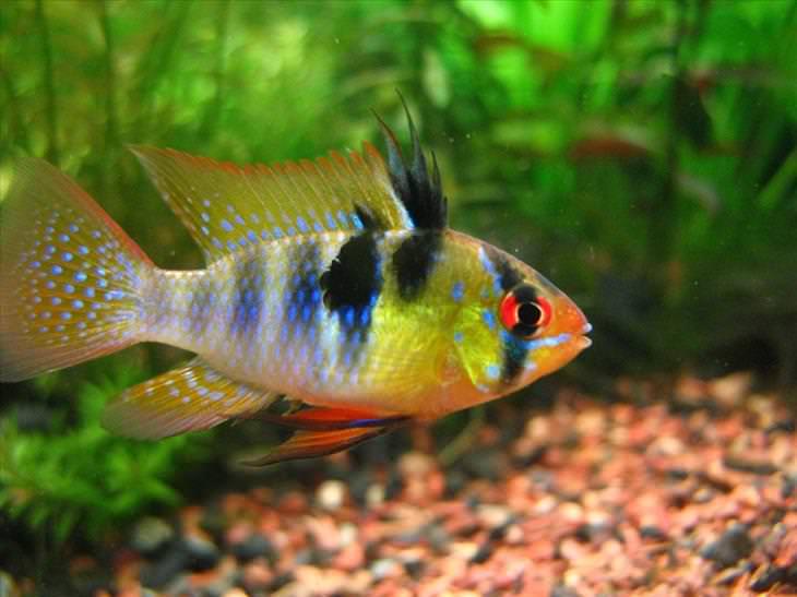 peixes mais lindos do mundo