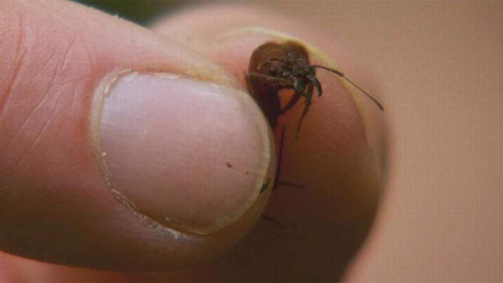 Natureza 11 curiosidades incríveis sobre as formigas
