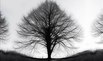 black tree on white background