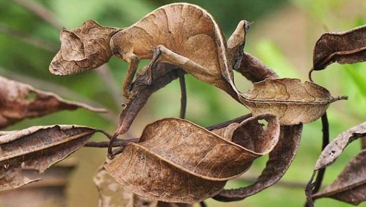 encontre os animais camuflados na natureza