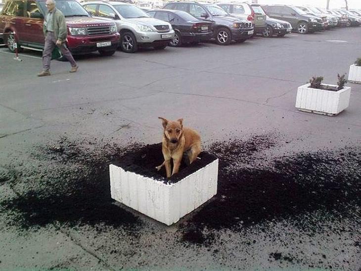 cães hilários
