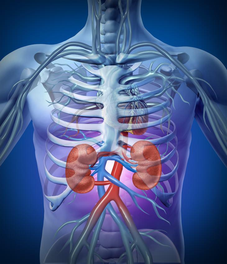 Saúde: 6 Sinais de que você pode ter pedra nos rins